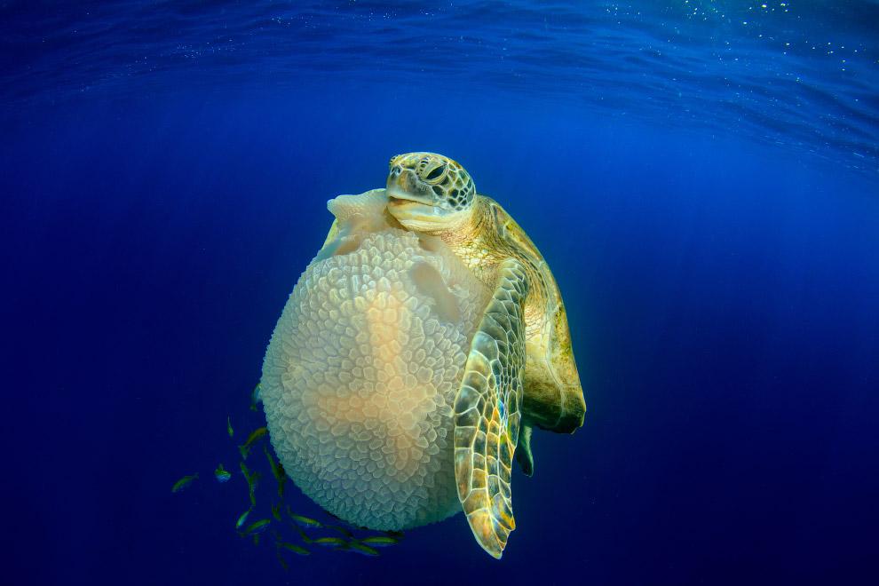 luchshie fotografii podvodnogo mira 2016 goda 11