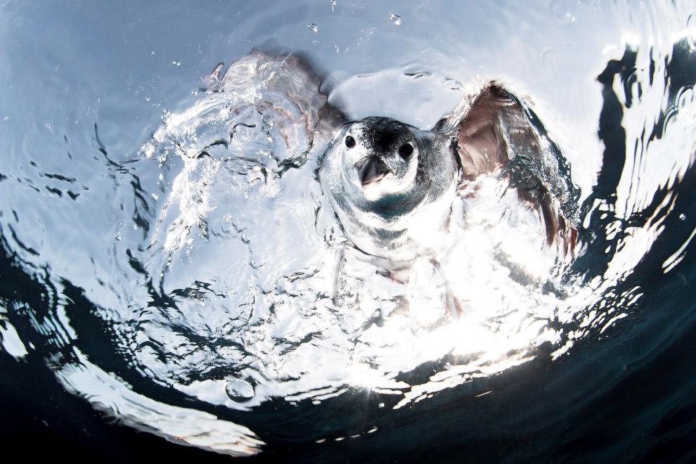 luchshie fotografii podvodnogo mira 2016 goda 12