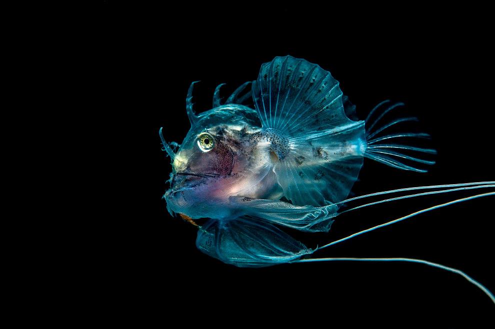 luchshie fotografii podvodnogo mira 2016 goda 17