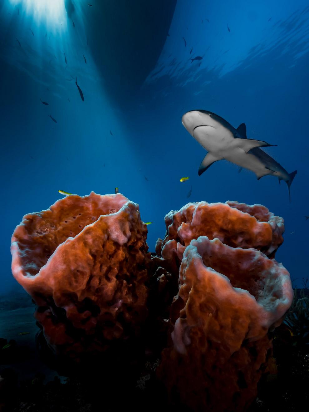 luchshie fotografii podvodnogo mira 2016 goda 2