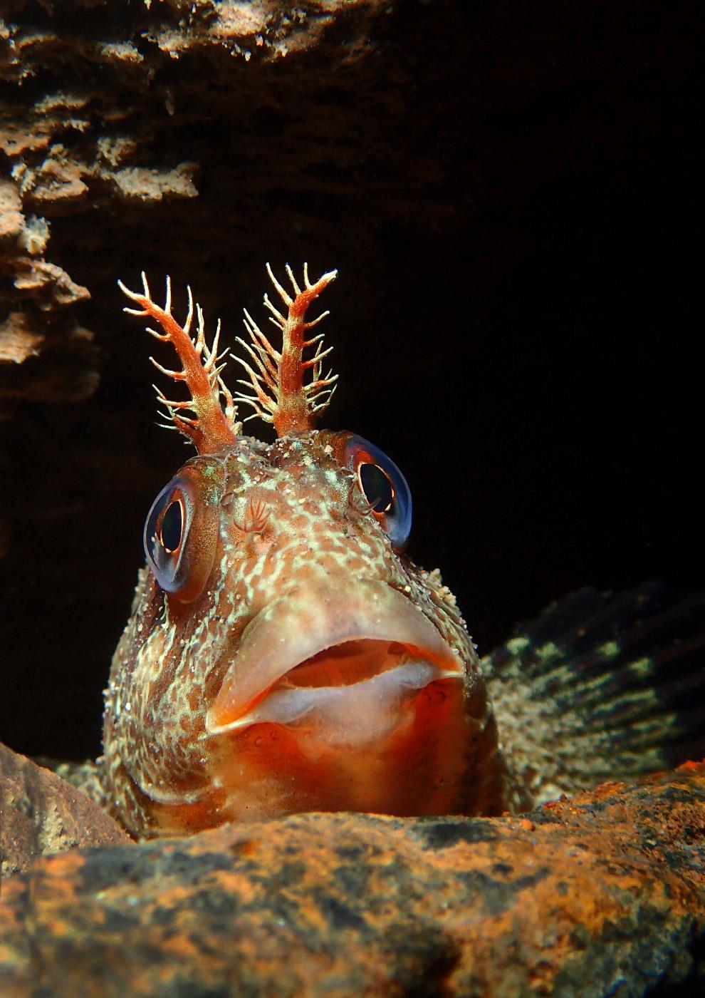 luchshie fotografii podvodnogo mira 2016 goda 20