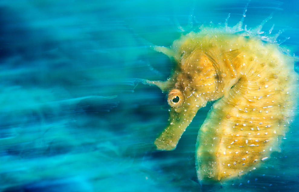 luchshie fotografii podvodnogo mira 2016 goda 22