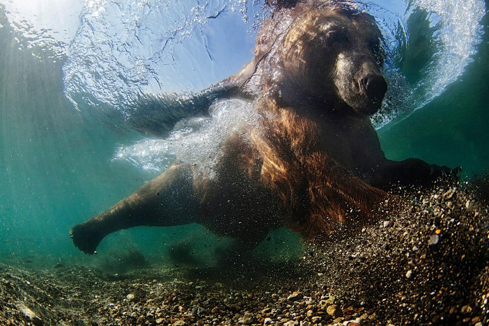 luchshie fotografii podvodnogo mira 2016 goda 4