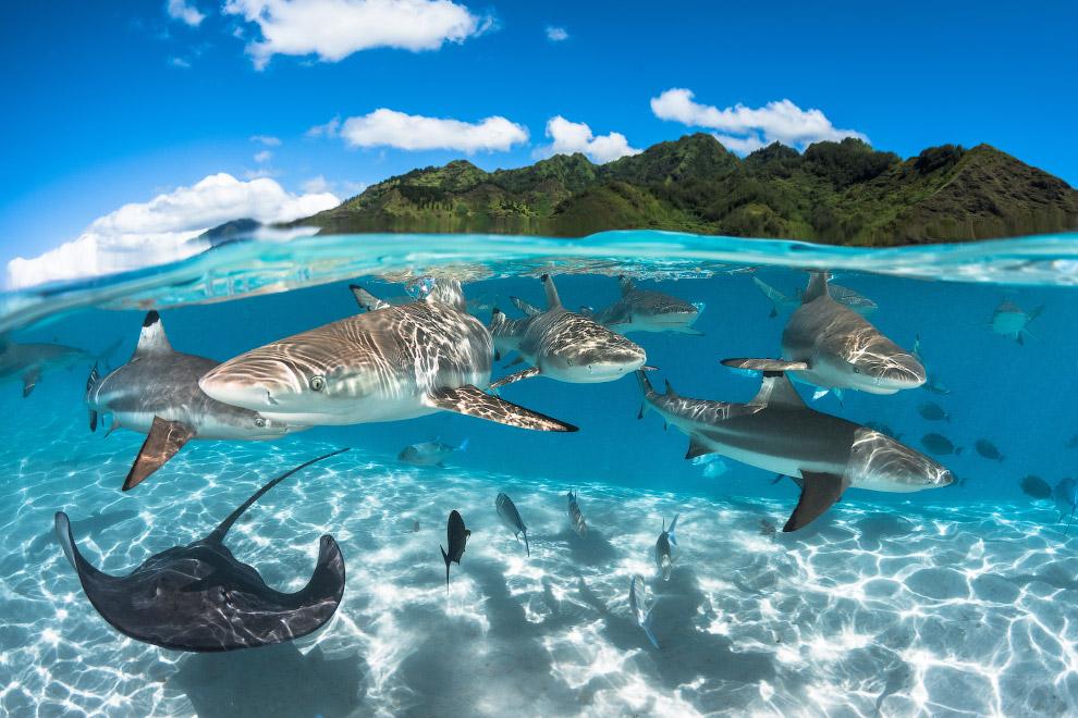luchshie fotografii podvodnogo mira 2016 goda 6