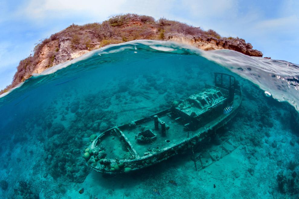 luchshie fotografii podvodnogo mira 2016 goda 7