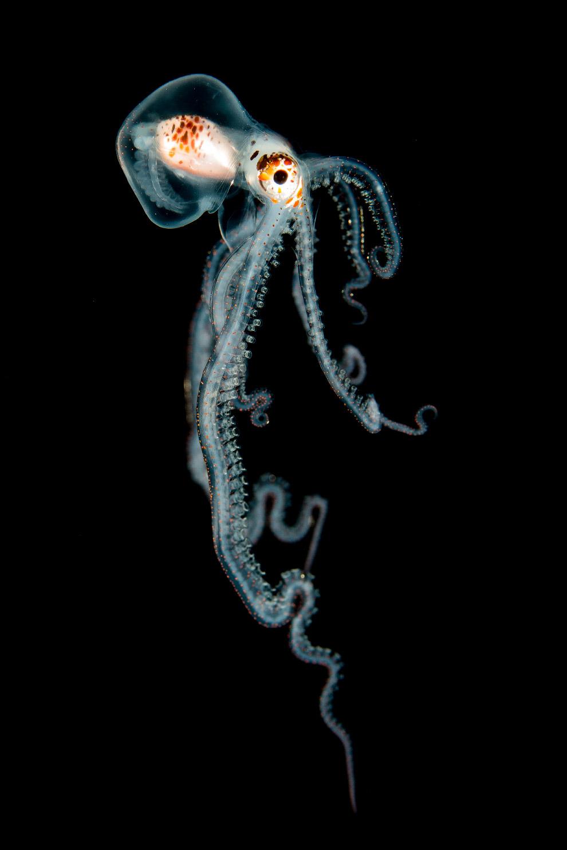 luchshie fotografii podvodnogo mira 2016 goda 8