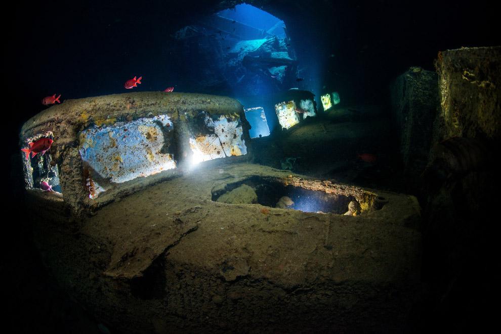 luchshie fotografii podvodnogo mira 2016 goda 9