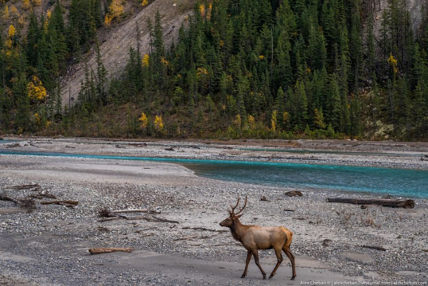 kanada skalistye gory 24
