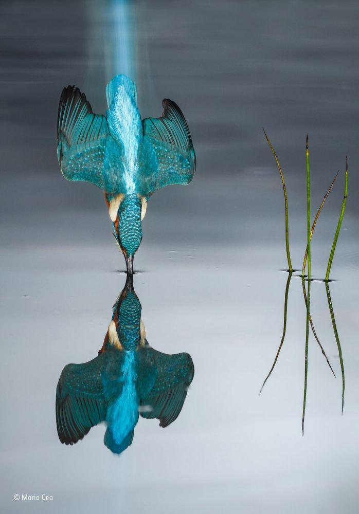 konkurs fotografij dikoj prirody 13