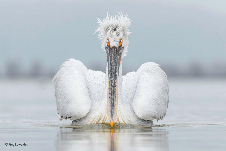 konkurs fotografij dikoj prirody 4