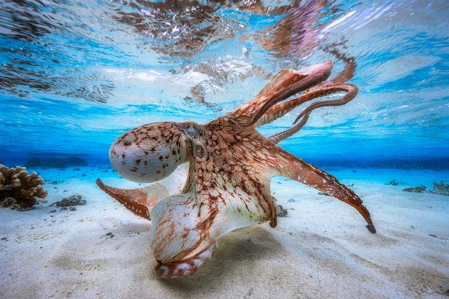 konkurs podvodnoj fotografii 1