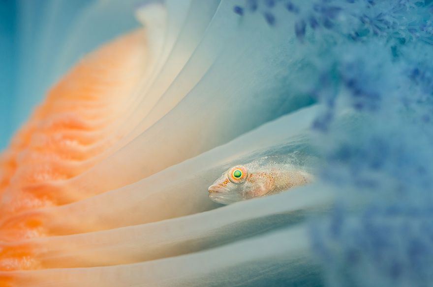 konkurs podvodnoj fotografii 12