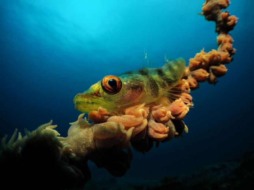 konkurs podvodnoj fotografii 13