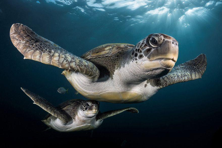konkurs podvodnoj fotografii 19