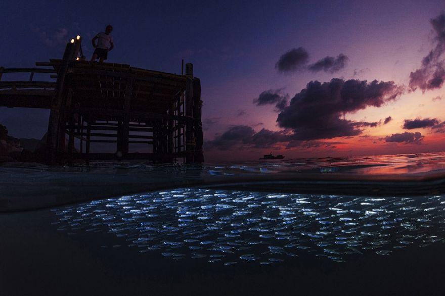 konkurs podvodnoj fotografii 21