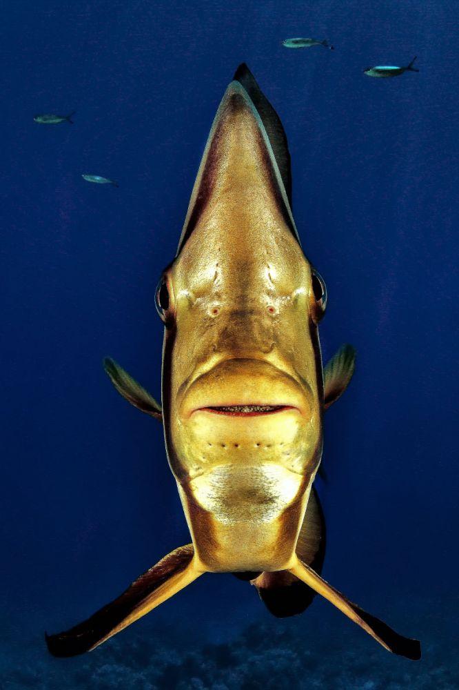 konkurs podvodnoj fotografii 3