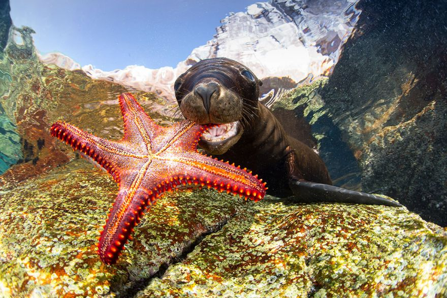 konkurs podvodnoj fotografii 5