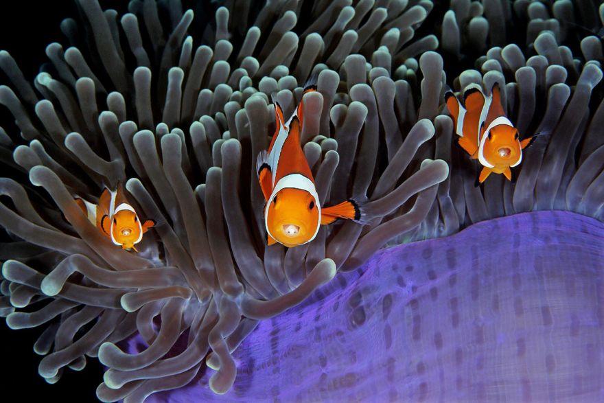 konkurs podvodnoj fotografii 6