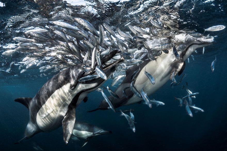 konkurs podvodnoj fotografii 7