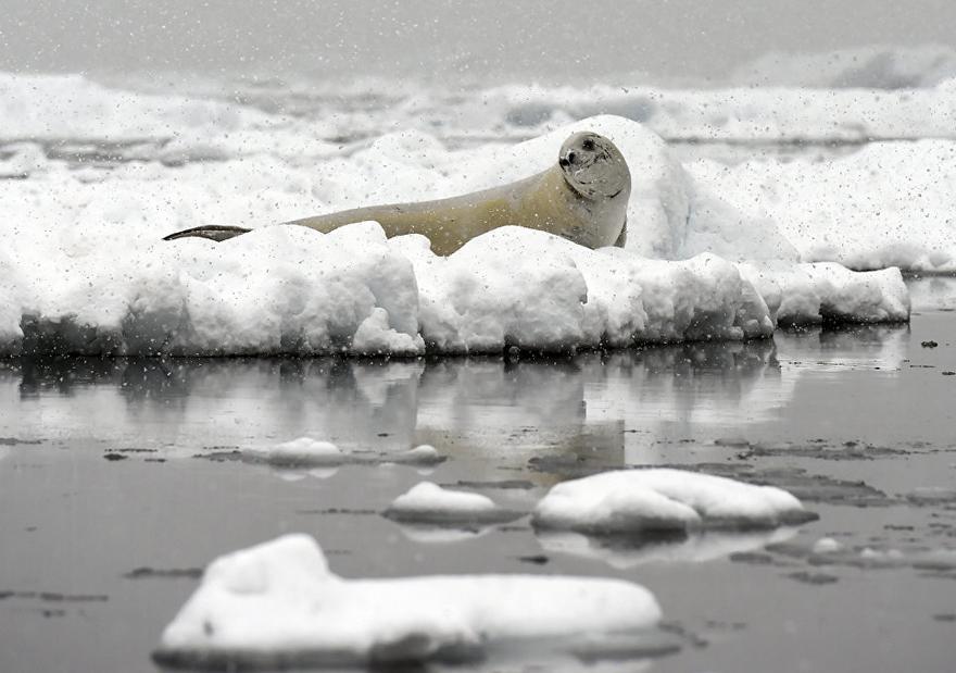 antarktida 8